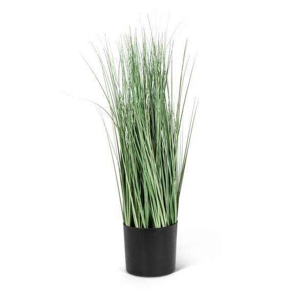 Small Plain Grass in Pot