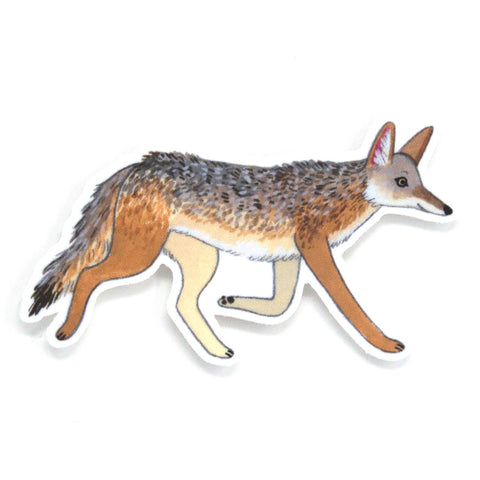Coyote Sticker
