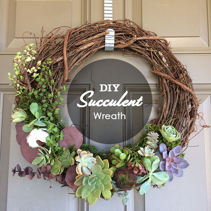 DIY Tutorial - 4 Easy Steps to Make a Grapevine Wreath with LIVE Succulents