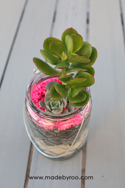DIY Tutorial - Succulent Gifts