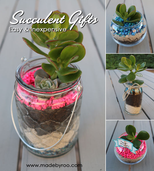 IZZAROO - DIY Tutorial - How to make succulent gifts