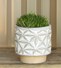 Load image into Gallery viewer, Star Planter - 3 sizes