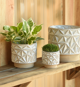 Star Planter - 3 sizes