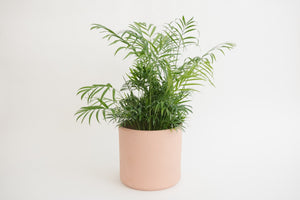 Terra Cotta Cylinder - Pot/ Planter