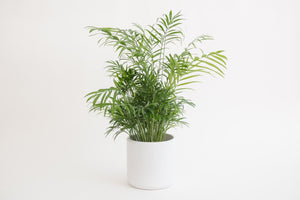 "6"" Pot / Planter - Gloss White Cylinder"