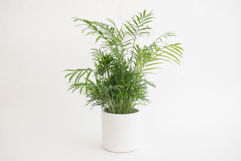 "6"" Pot / Planter - Matte White Cylinder"