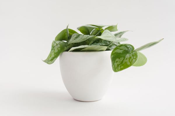 "5"" Pot / Planter - Matte White Bell"