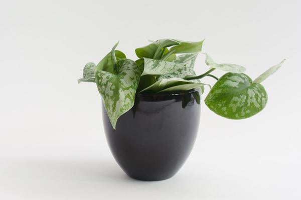 "5"" Pot / Planter - Gloss Black Bell"