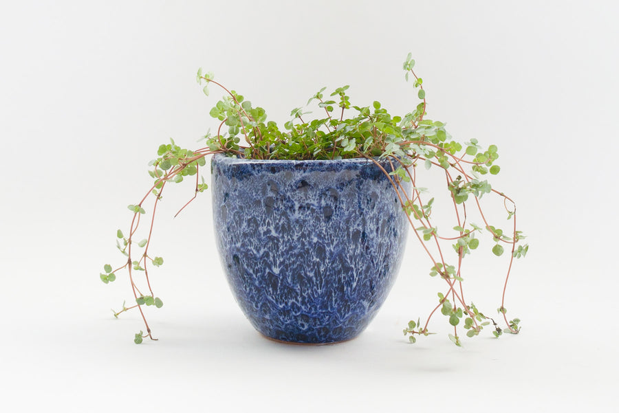 "5"" Pot / Planter - Running Cobalt Bell"
