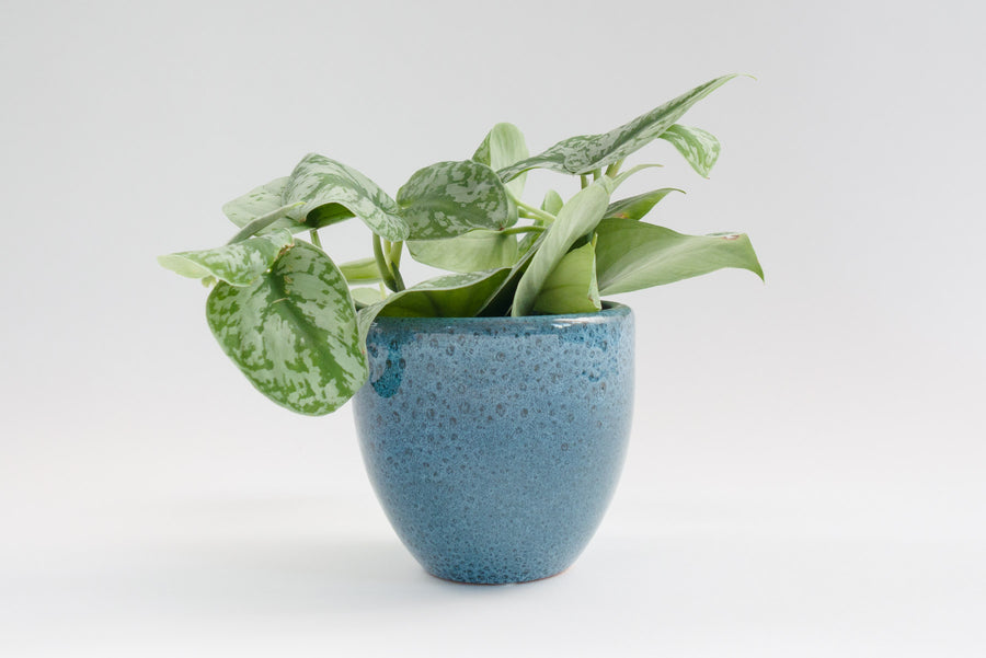 "5"" Pot / Planter - Arctic Blue Bell"