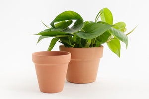 Terra Cotta Standard - Pot / Planter