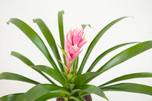 bromeliad / assorted