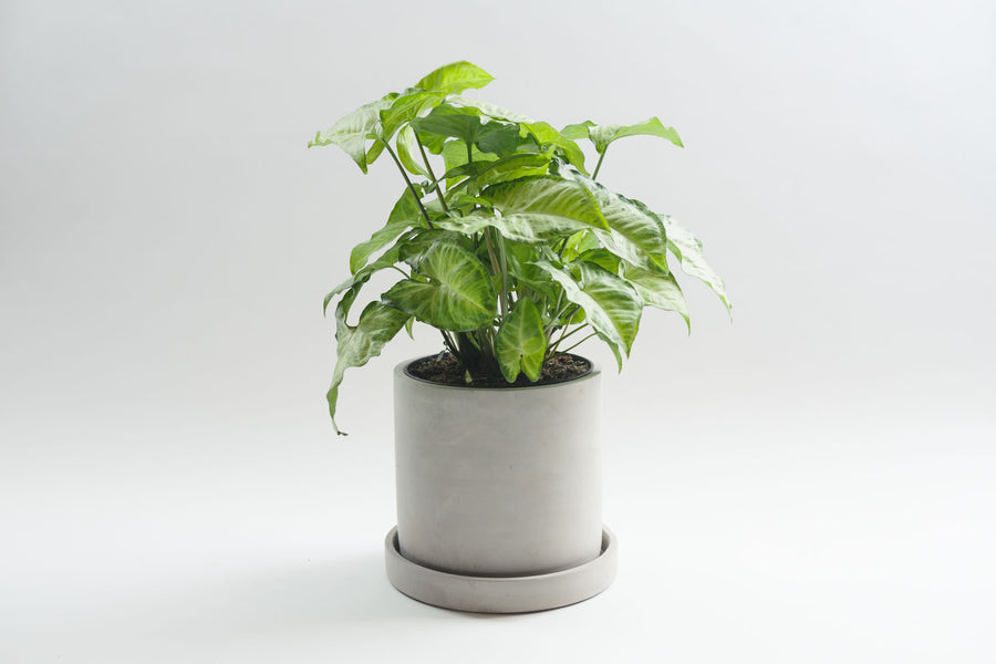 Cement Cylinder with Tray - Pot / Planter