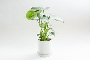 Matte White Pot with Tray - Pot / Planter