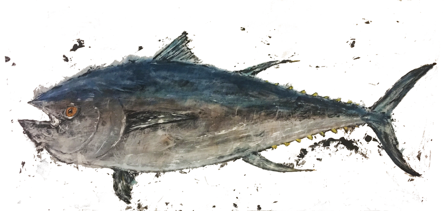 "502 pound Bluefin Tuna caught on the ""Done Deal"" during The Wharf's Orange Beach Billfish Classic"