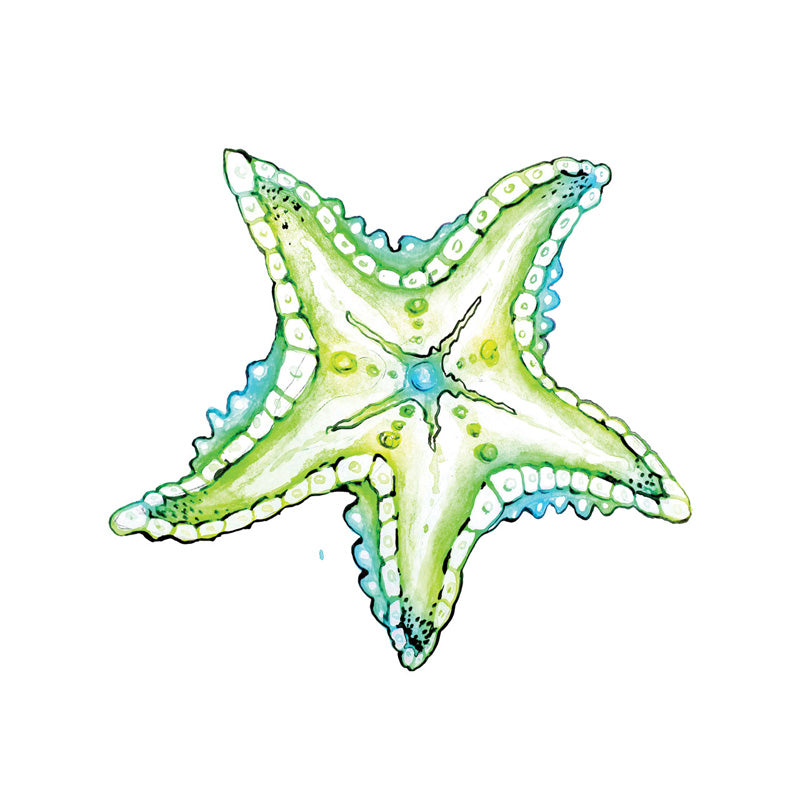 Beach Starfish Coasters (Set of 24)