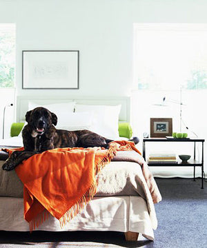 Why Memory Foam Beds are Important For Senior Dogs