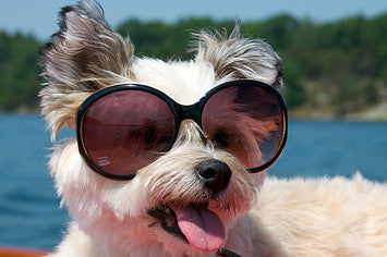 Keeping Your Dog Cool This Summer! The Guide to A Healthy & Happy Summer Pup
