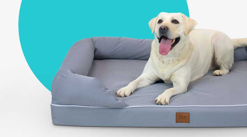 Designer & Orthopedic Dog Beds
