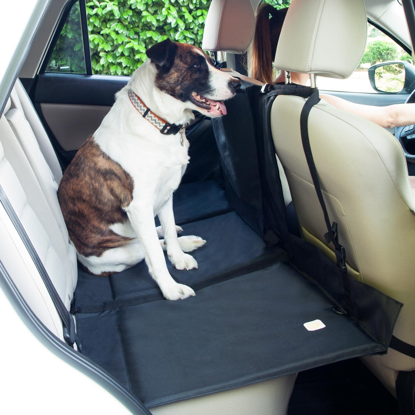 Side View Of Backseat Pet Bridge Set Up In Car With Dog Sitting On Top ...