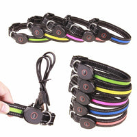 DOG E LED USB Rechargeable Flashing Collars