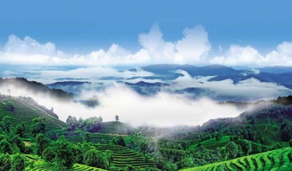 DEPOSIT CHINA TEA TRIP (APRIL 16-25, 2020)