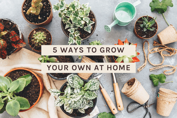5 Ways to Grow Your Own at Home