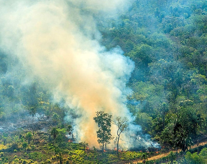 Rainforest Alliance Supports Brazilian Frontliners Fighting Amazon Fires