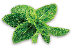 Peppermint Leaves - Tripura Essential Oil