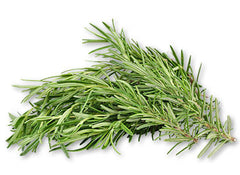 Rosemary - Tripura Essential Oil