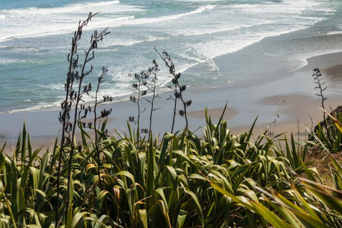 Guide to 5 Amazing Native New Zealand Plants - Looking at flax growing wild in the East Cape of New Zealand