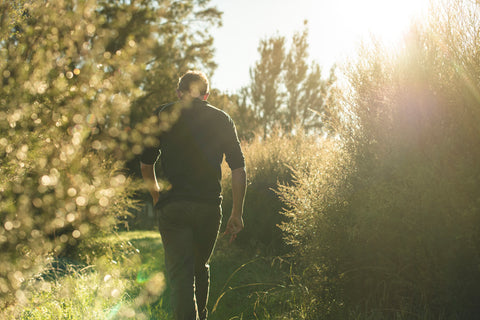 Natural Skincare: Why Going Natural is Key - Man walking at golden hour through mānuka plants.