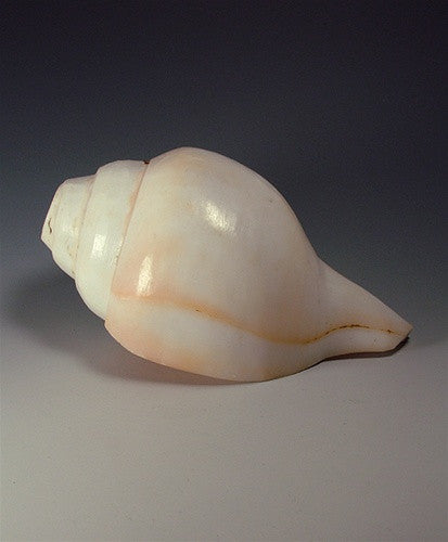 LARGE INDIAN CONCH or CHANK SHELL