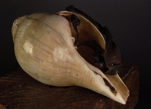 LARGE PLAYABLE INDIAN CONCH SHELL - Antique Finish
