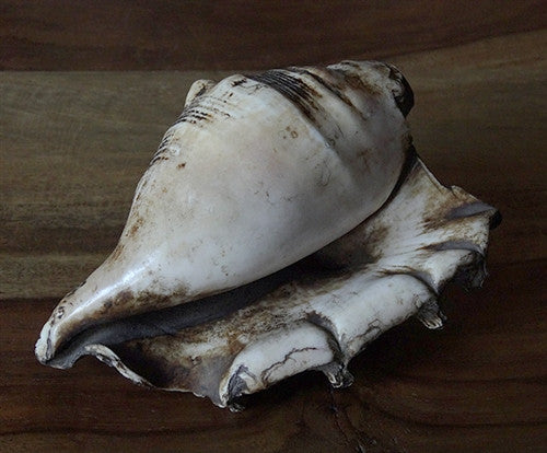 Antique Ritual Conch Shell Trumpet