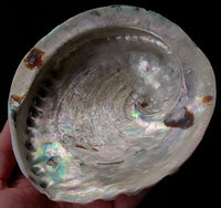 Natural Abalone Shell for Smudging