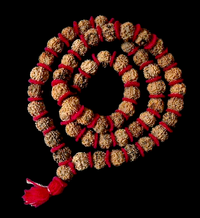 Large 54 Bead Traditional Indian Rudraksha Mala - 17mm