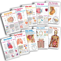 Educat Poster Pack - Human Anatomy