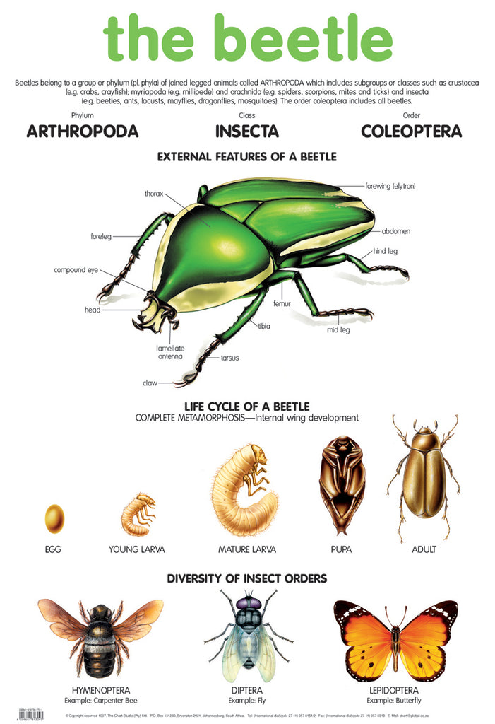 Poster  - Beetle