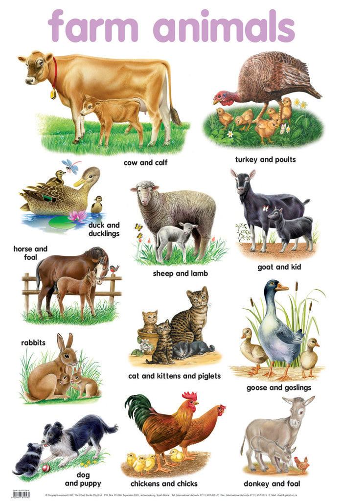 Poster - Farm animals