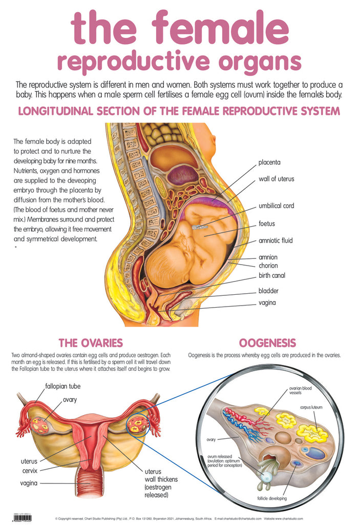 Poster - Female reproductive
