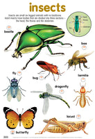 Poster - Insects