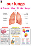Poster - Our lungs