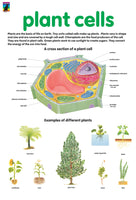 Poster - plant cells
