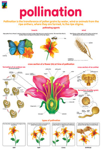Poster - pollination