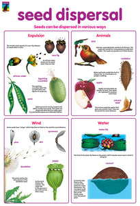 Poster - Seed dispersal
