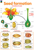 Poster - Seed formation