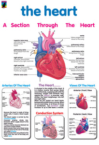 Poster - The heart