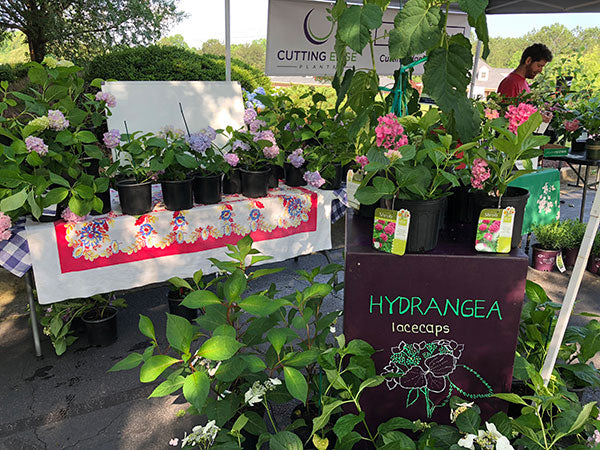 Things We Learned as a New Nursery at the Penny McHenry Hydrangea Festival