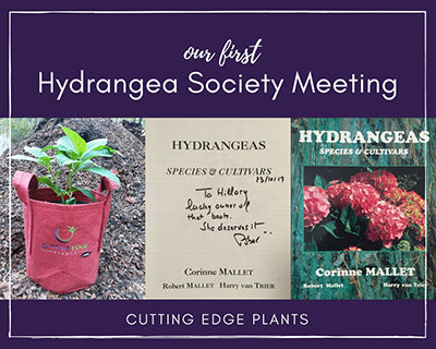 Our First Hydrangea Society Meeting & Hydrangea Pairing Ideas
